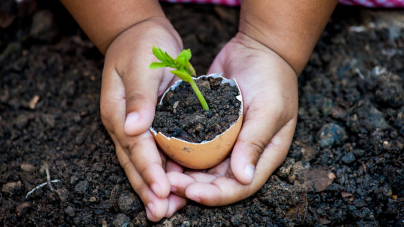 sustainability at edge early learning