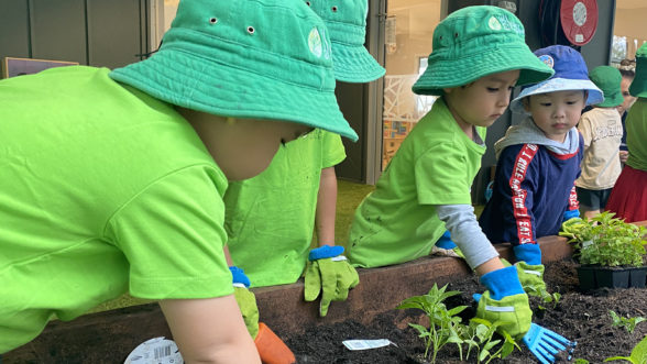 4 children growing vegetables in garden bed